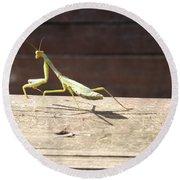 Praying Mantis  Round Beach Towel by Don Koester