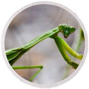 Praying Mantis Looking Round Beach Towel
