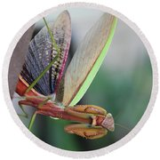 Round Beach Towel featuring the photograph Praying Mantis by Stacey Zimmerman