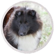 Pretty Black And White Sheltie Dog Round Beach Towel
