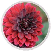 Pretty Blooming Red Dahlia Flower Blossom Round Beach Towel