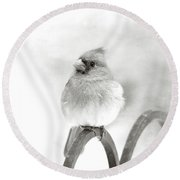 Pretty Cardinal In Black And White Round Beach Towel