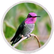 Pretty In Pink Anna's Hummingbird Round Beach Towel
