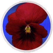 Round Beach Towel featuring the photograph Pretty Pansy by Donna Brown