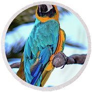Pretty Parrot Round Beach Towel