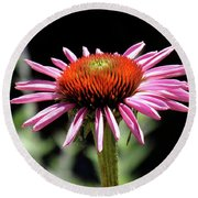 Pretty Pink Coneflower Round Beach Towel