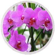 Pretty Pink Phalaenopsis Orchids #2 Round Beach Towel