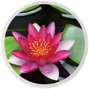 Pretty Red Water Lily Flowering In A Water Garden Round Beach Towel