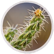Prickly Branch Round Beach Towel