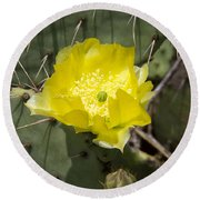 Prickly Pear Cactus Blossom - Opuntia Littoralis Round Beach Towel by Kathy Clark