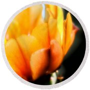 Round Beach Towel featuring the photograph Prickly Pear Flower by Lynn Geoffroy