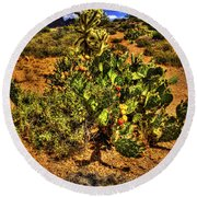 Prickly Pear In Bloom With Brittlebush And Cholla For Company Round Beach Towel