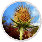 Round Beach Towel featuring the photograph Prickly Thistle by Nina Ficur Feenan