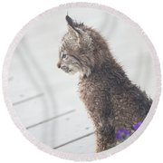 Profile In Kitten Round Beach Towel