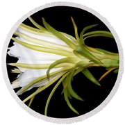 Profile Night Blooming Cereus Round Beach Towel