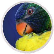 Profile Of A Lorikeet Round Beach Towel