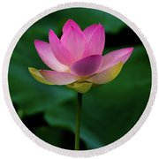 Profile Of A Lotus Lily Round Beach Towel