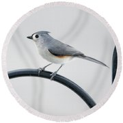 Profile Of A Tufted Titmouse Round Beach Towel