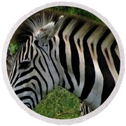 Profile Zebra Round Beach Towel