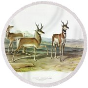 Prong-horned Antelope Round Beach Towel