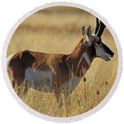 Pronghorn Antelope Round Beach Towel