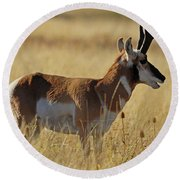 Pronghorn Antelope Round Beach Towel by Cindy Murphy - NightVisions