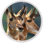 Pronghorn Antelope Pair Round Beach Towel