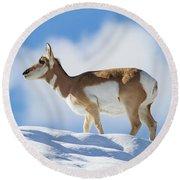 Pronghorn Doe On Snowy Ridge Round Beach Towel