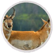 Pronghorn Parting Ways Round Beach Towel