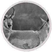 Pronghorn Parting Ways Black And White Round Beach Towel