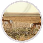 Pronghorn Pose Round Beach Towel