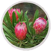 Round Beach Towel featuring the photograph Proteas In Bloom By Kaye Menner by Kaye Menner