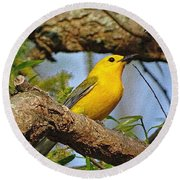 Round Beach Towel featuring the photograph Prothonotary Warbler II by Sandy Keeton