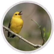 Prothonotary Warbler Singing Round Beach Towel