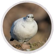 Ptarmigan Going For A Stroll Round Beach Towel