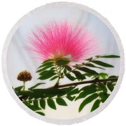 Puff Of Pink - Mimosa Flower Round Beach Towel by MTBobbins Photography