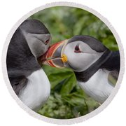 Puffin Love Round Beach Towel