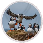 Puffins Round Beach Towel by Brian Tarr