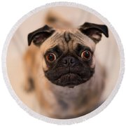 Round Beach Towel featuring the photograph Pug Dog by Laura Fasulo