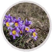 Round Beach Towel featuring the photograph Pulsatilla by Andreas Levi