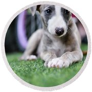 Whippet Puppy Round Beach Towel