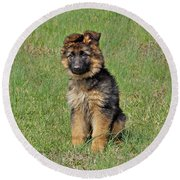 Round Beach Towel featuring the photograph Puppy Halo by Sandy Keeton