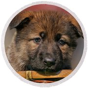 Round Beach Towel featuring the photograph Puppy In Red Heart by Sandy Keeton