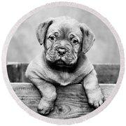 Puppy - Monochrome 3 Round Beach Towel
