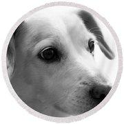 Puppy - Monochrome 4 Round Beach Towel