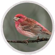 Purble Finch Round Beach Towel