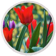 Purple And Red Tulips Round Beach Towel by Mitch Shindelbower