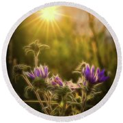 Purple Aster Glow Round Beach Towel
