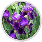 Purple Bearded Irises Round Beach Towel by Penny Lisowski