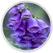 Purple Bell Flowers Foxglove Flowering Stalk Round Beach Towel by Carol F Austin